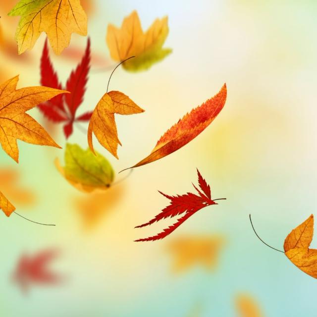 leaves_falling-5849